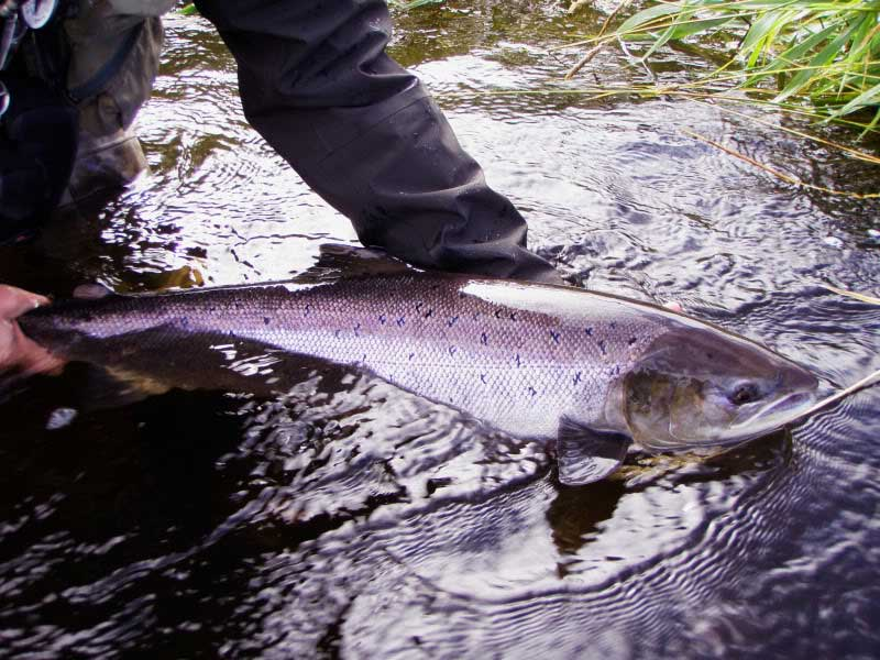 Teifi Trout Association Catch Release